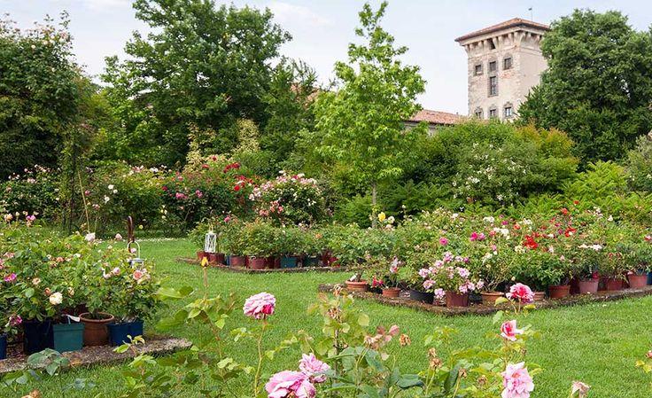 I segreti delle rose a castello quistini shabby chic - Il giardino dei fiori segreti ...