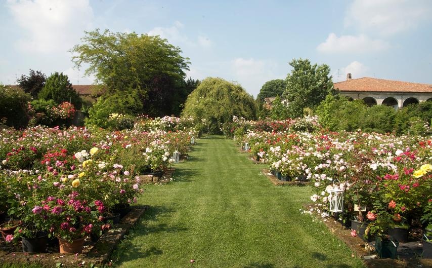 I segreti delle rose a castello quistini shabby chic for Progettista giardini