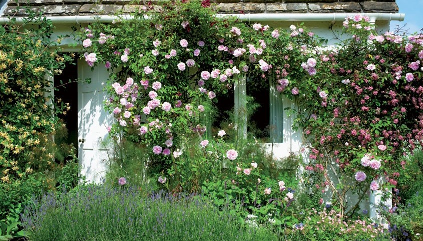Il giardino di virginia woolf shabby chic mania by for Ombra in inglese