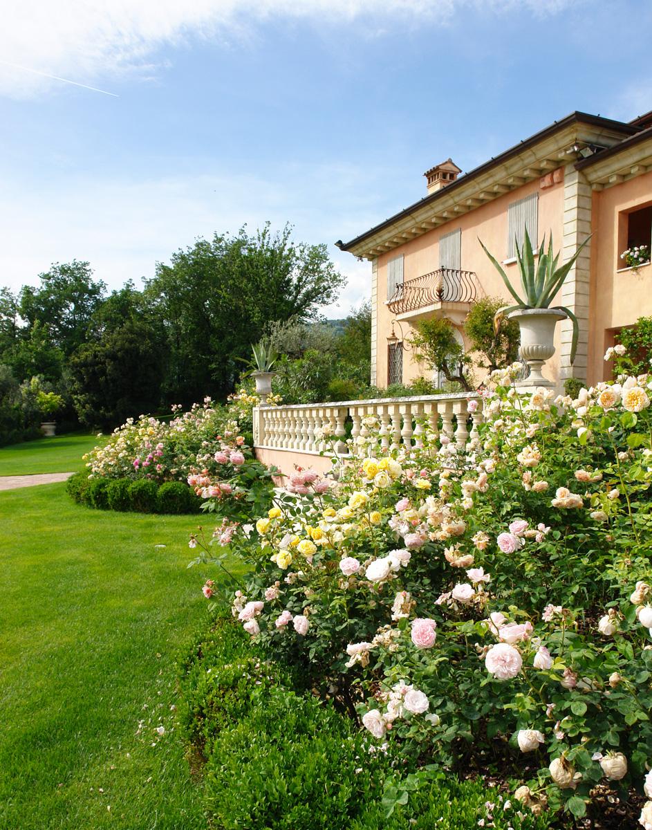 Rose paghera collezioni uniche per giardini da sogno for Paghera giardini