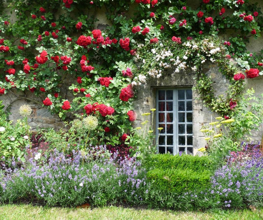 Rose paghera collezioni uniche per giardini da sogno for Nuovo design del paesaggio inghilterra